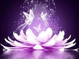 Lotus papillons
